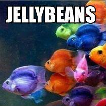 JellyBean Parrot Cichlids